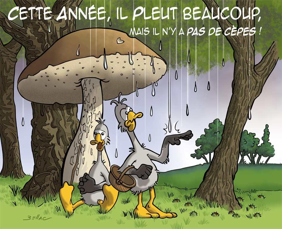 L'Avis des Oies : Série humoristique sur le Périgord - les cèpes